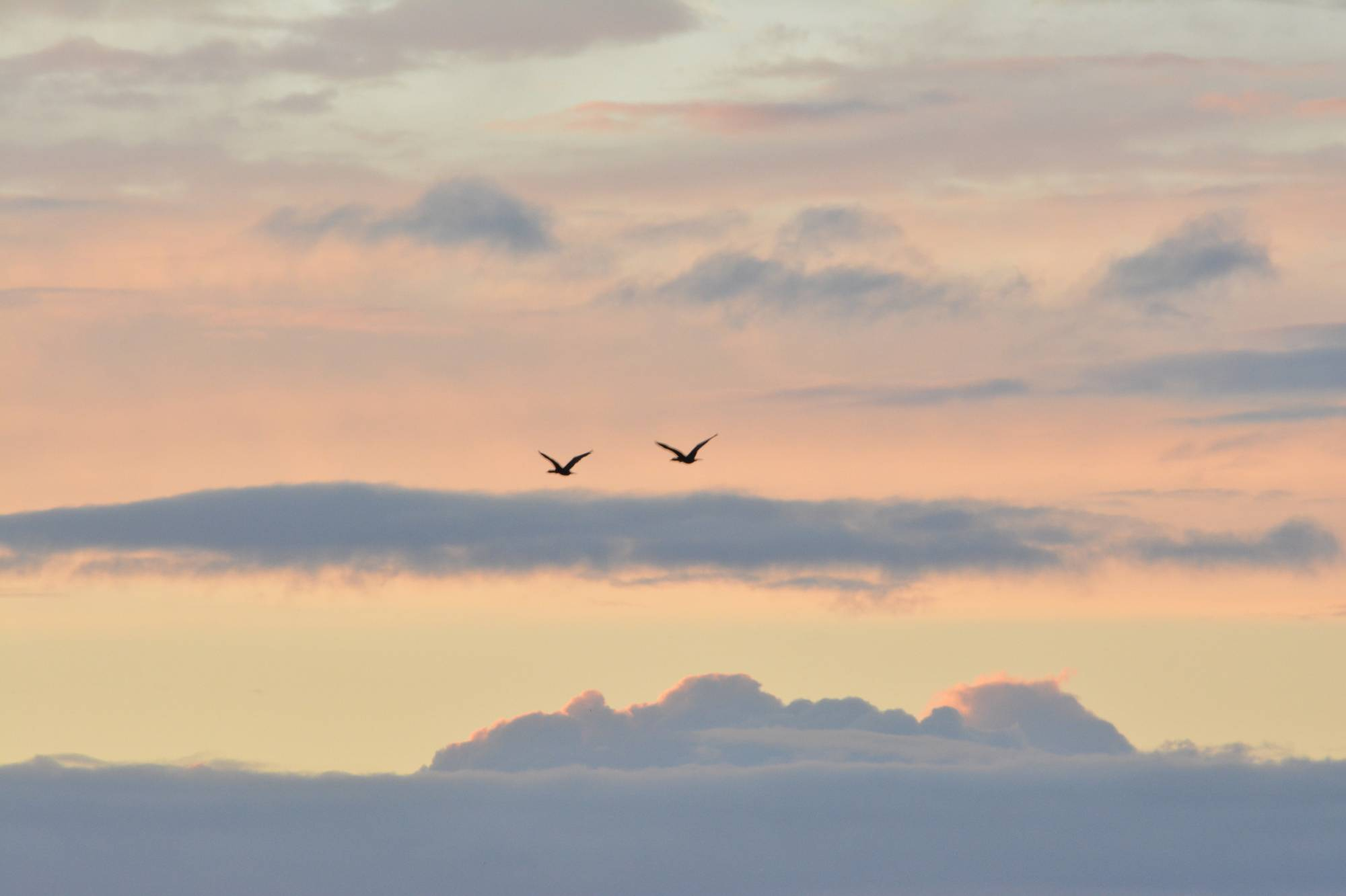 picture regarding High Flight Poem Printable known as Poetry Choices: Wild Geese as a result of Mary Oliver Anythink Libraries