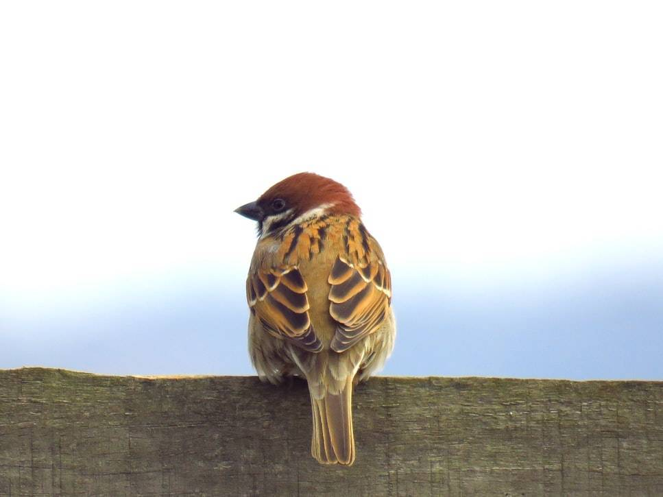 A bird sits on a fence.