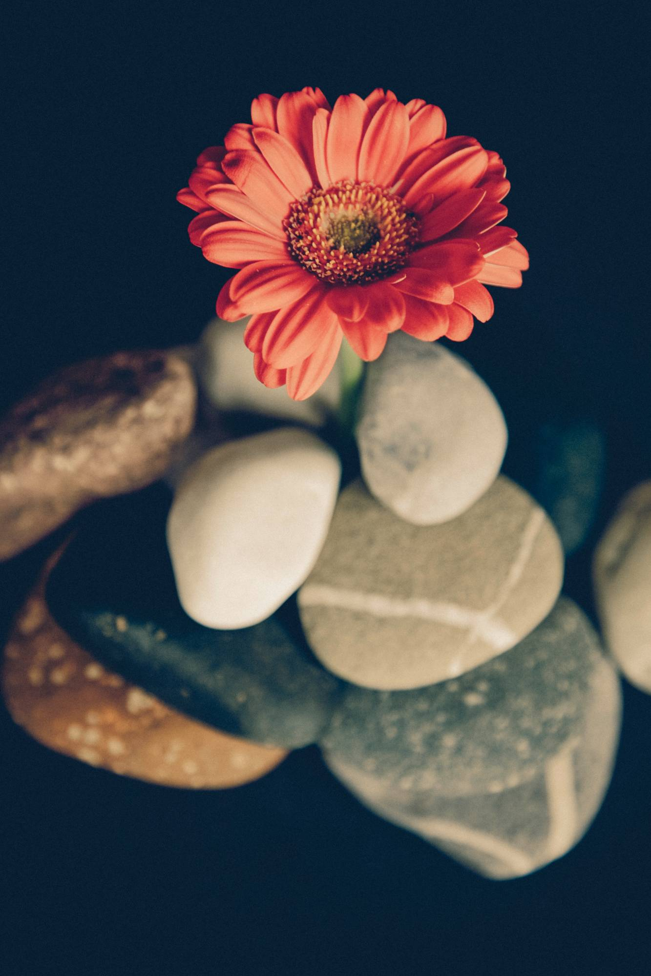 smooth rocks and a red flower