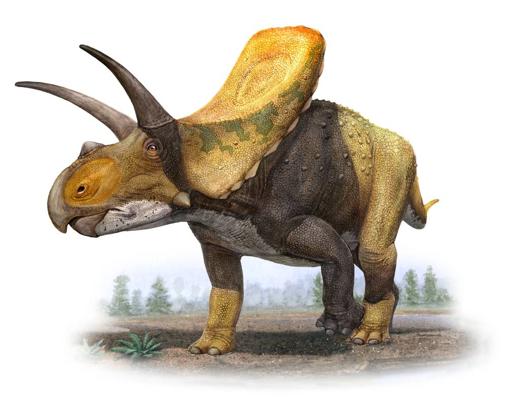 Rendering of a torosaurus by artist Sergey Krasovsky, courtesy DMNS